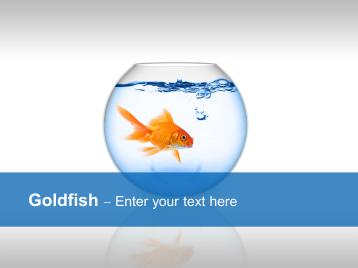 Goldfish _https://www.presentationload.com/goldfish-1-1.html