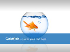 Goldfish _https://www.presentationload.com/goldfish-1-1.html