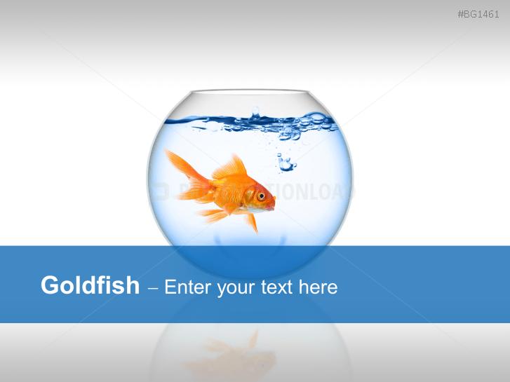Goldfisch _https://www.presentationload.de/goldfisch.html