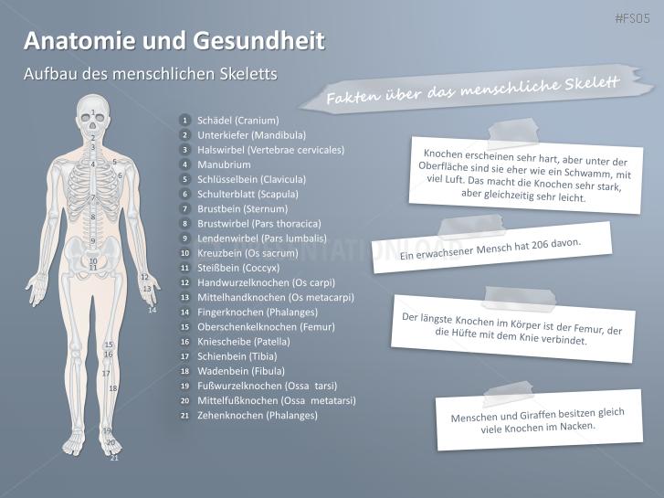 Kostenlose PowerPoint Anatomie Vorlagen | PresentationLoad