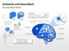 Kostenlose PowerPoint Anatomie-Vorlagen _http://www.presentationload.de/kostenlose-powerpoint-anatomie-vorlagen.html